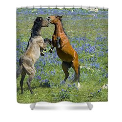 Dueling Mustangs Shower Curtain