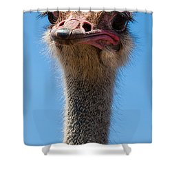 Duh Shower Curtain by Jean Noren