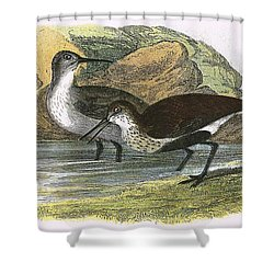 Dunlin Shower Curtain