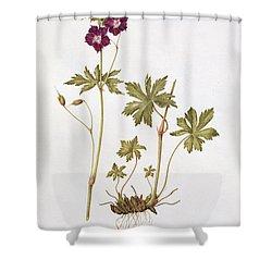 Dusky Cranesbill Shower Curtain by Diana Everett