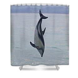 Dusky Dolphin, Kaikoura, New Zealand Shower Curtain by Venetia Featherstone-Witty
