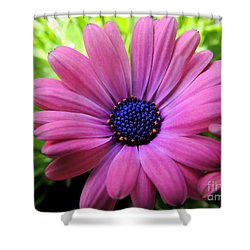 Shower Curtain featuring the photograph Dusky Rose Fortunette by Kristine Merc