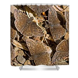 Duskywing Butterflies Shower Curtain by Melinda Fawver