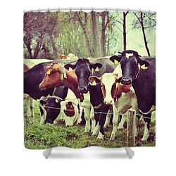 Dutch Cows Shower Curtain by Nick  Biemans