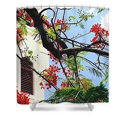 Duval Street Flame Tree Shower Curtain by Valerie Reeves