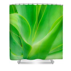 Dwarf Agave Shower Curtain