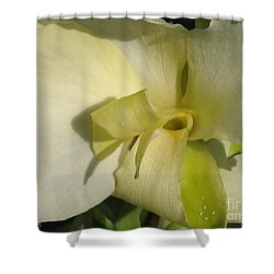 Shower Curtain featuring the photograph Dwarf Canna Lily Named Ermine by J McCombie