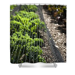 Dwarf Green Curled Shower Curtain by Anne Gilbert