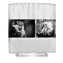 Shower Curtain featuring the photograph diptych Last hope of Freedom  by Stwayne Keubrick