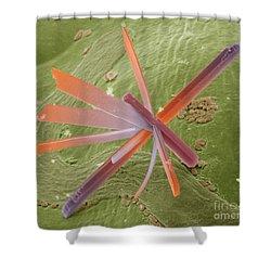 E8400300 - Pesticide Shower Curtain by Spl