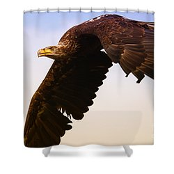 Eagle In Flight Shower Curtain by Nick  Biemans