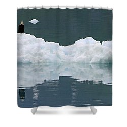 Eagle On Ice Shower Curtain by Shoal Hollingsworth