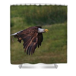 Eagle With Prey Shower Curtain