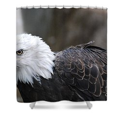 Eagle With Ruffled Feathers Shower Curtain by DejaVu Designs