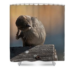 Shower Curtain featuring the photograph Ear Wax by Rod Wiens