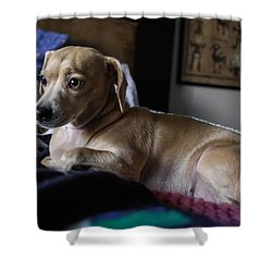 Shower Curtain featuring the photograph Early by Angela J Wright