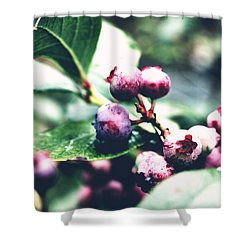 Shower Curtain featuring the photograph Early Blueberries by Rachel Mirror