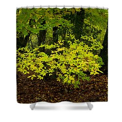 Early Fall In Bidwell Park Shower Curtain