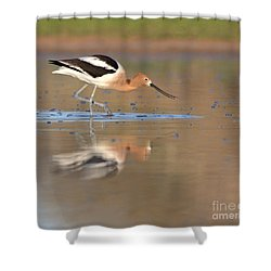 Shower Curtain featuring the photograph Early Morning Avocet by Ruth Jolly