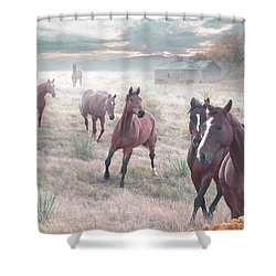 Early Morning Fog Shower Curtain by Bill Stephens