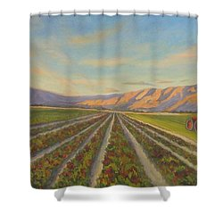 Early Morning Harvest Shower Curtain