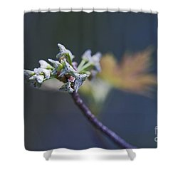 Early Morning Kiss Shower Curtain by Maria Ismanah Schulze-Vorberg