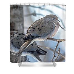 Early Mourning Shower Curtain by Cheryl Baxter