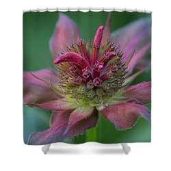 Early Spring Bee Balm Bud Shower Curtain