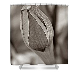 Early Spring Shower Curtain by Chris Berry