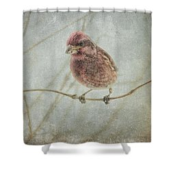 Early Spring Visitor Shower Curtain