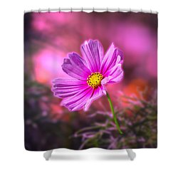 Early Sun Light Shower Curtain by Thomas Woolworth