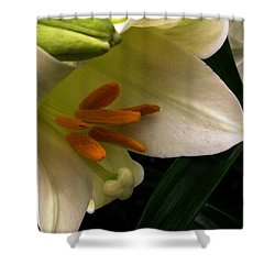 Easter 2014-4 Shower Curtain
