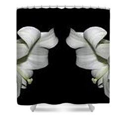 Easter Lilies Panorama Shower Curtain by Rose Santuci-Sofranko