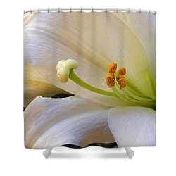 Shower Curtain featuring the photograph Easter Lily by Bonnie Willis