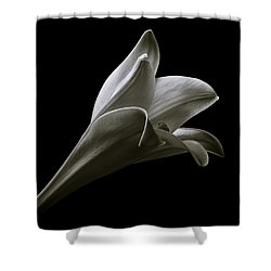 Easter Lily II Shower Curtain by Jeff Burton