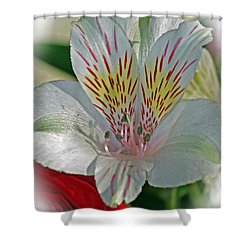 Easter Lily Shower Curtain by Karen Adams