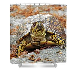 Shower Curtain featuring the photograph Eastern Box Turtle by Cynthia Guinn