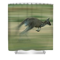 Eastern Grey Kangaroo Female Hopping Shower Curtain by Ingo Arndt