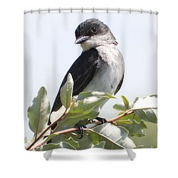 Shower Curtain featuring the photograph Eastern Kingbird by Anita Oakley