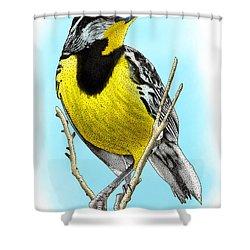 Eastern Meadowlark Shower Curtain by Roger Hall