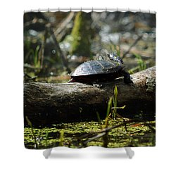Eastern Painted Turtle Shower Curtain by Rebecca Sherman