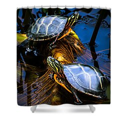 Eastern Painted Turtles Shower Curtain by Bob Orsillo