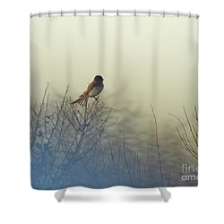 Eastern Phoebe Lacassine Pool  Lacassine Nwr Shower Curtain