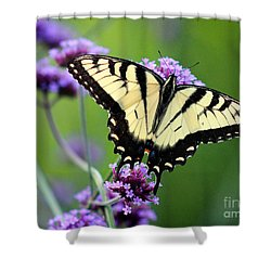 Eastern Tiger Swallowtail Butterfly 2014 Shower Curtain