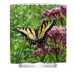 Shower Curtain featuring the photograph Eastern Tiger Swallowtail On Joe Pye Weed by Neal Eslinger