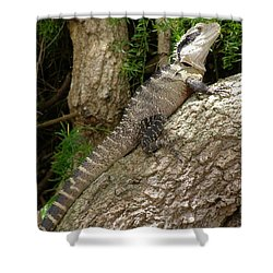 Eastern Water Dragon Shower Curtain by Bev Conover