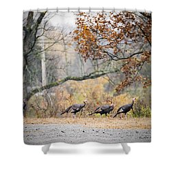 Eastern Wild Turkey  Shower Curtain