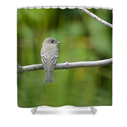 Eastern Wood Pewee Shower Curtain