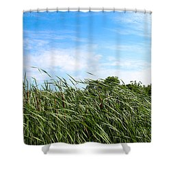 Shower Curtain featuring the photograph Easy Breezy Cattails by Anita Oakley
