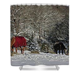 Eating Hay In The Snow Shower Curtain by Denise Romano